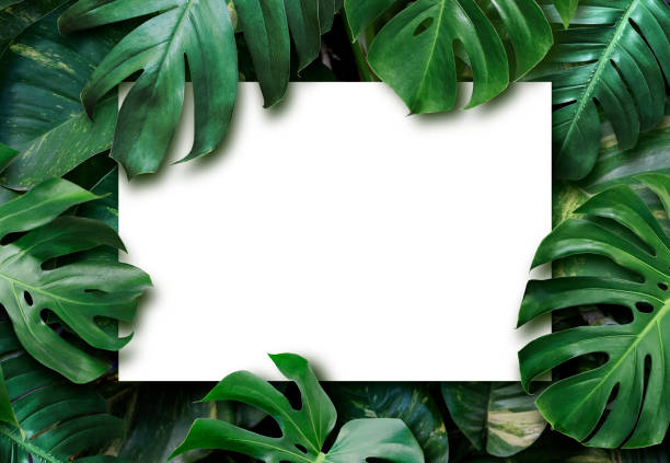 Tropical leaves and blank white paper background picture id1157177964?b=1&k=6&m=1157177964&s=612x612&w=0&h=yxflkd 2 l81fjvqojhhj8 pxni1mid4xkeg9dp5dry=