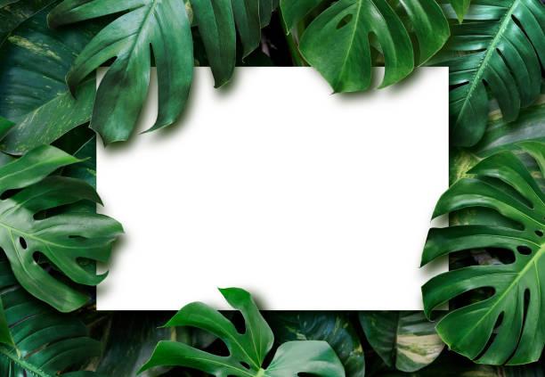 Tropische Blätter und leereweiße Papier Hintergrund – Foto