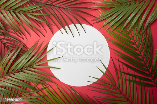 Tropical leaves and circle frame background for copy space or text creative advertising stock photo