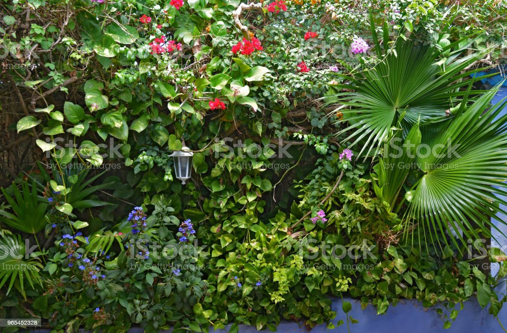 Tropical leaves and flowers royalty-free stock photo