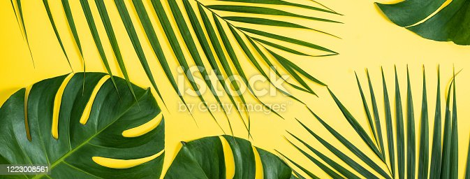Tropical leaves background, palm leaves, monstera leaves isolated on bright yellow background, top view, flat lay, overhead summer design concept.
