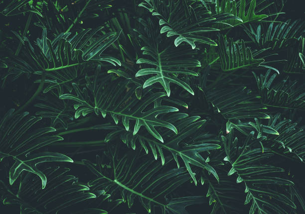 熱帶葉子背景, 叢林葉子 - 熱帶式樣 個照片及圖片檔
