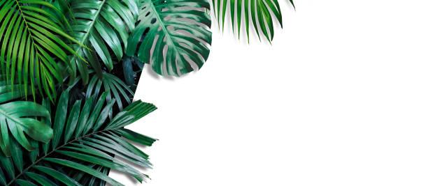 Tropisches Banner-Banner auf weißem Hintergrund mit Kopierraum – Foto