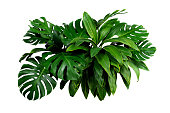 istock tropical leaves, dark green foliage in jungle, nature background 1251434169