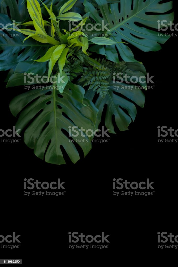 Tropical Leaves Decoration On Black Background Fern Monstera And Lemon Lime Dracaena Stock Photo Download Image Now Istock Tropical leaves on black background vector illustration. https www istockphoto com photo tropical leaves decoration on black background fern monstera and lemon lime dracaena gm843982250 138009247