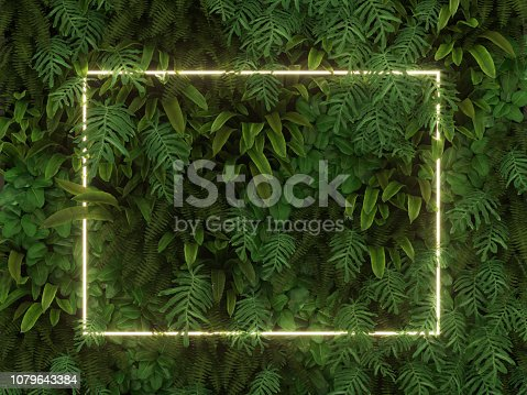 Tropical leaves foliage jungle plant bush nature backdrop with white colorful frame
