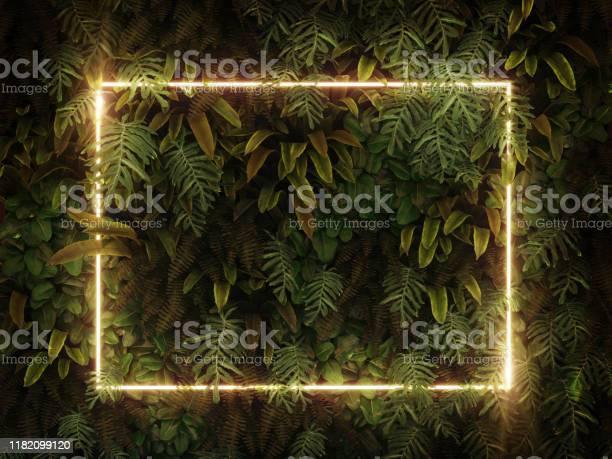 Tropical leaves foliage jungle plant bush nature backdrop with white picture id1182099120?b=1&k=6&m=1182099120&s=612x612&h=4ed59tecxwej33xmdkm5za4gboj64kticowrj2t2pws=