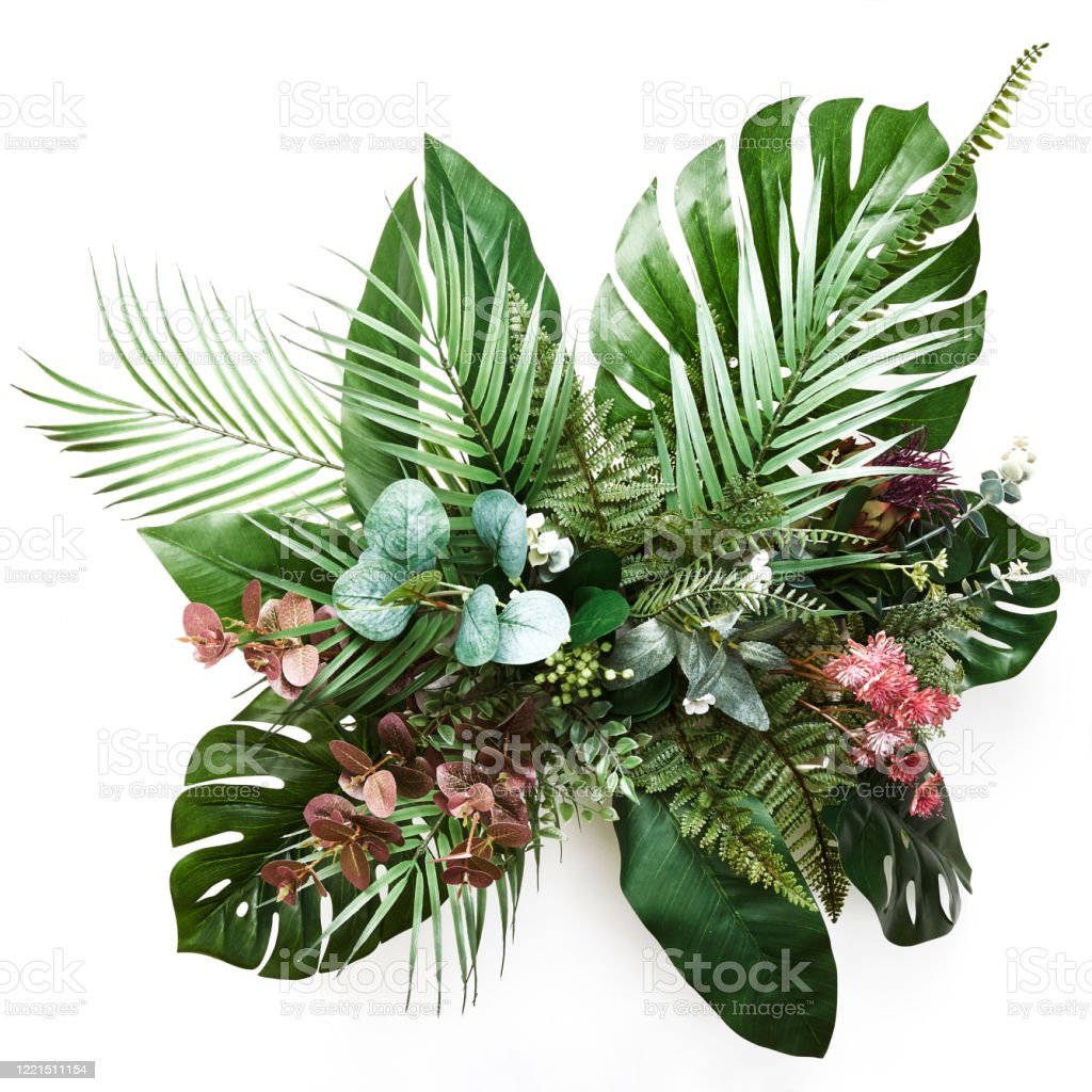 Vr 9iebrdrxuqm See more ideas about tropical, tropical leaves, leaves. 1