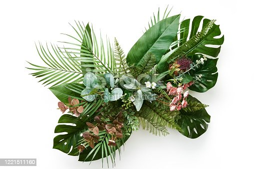 istock Tropical leaves foliage plant bush floral arrangement nature backdrop isolated on white background 1221511160