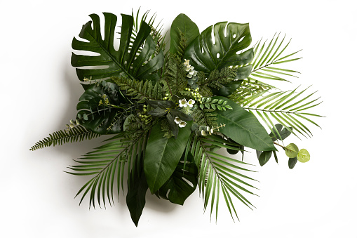 Tropical leaves foliage plant bush floral arrangement nature backdrop isolated on white background