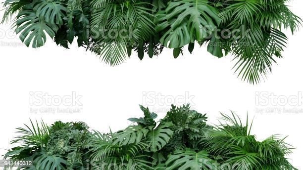 Tropical leaves foliage plant bush floral arrangement nature backdrop picture id941440312?b=1&k=6&m=941440312&s=612x612&h=mibieisrvfbj5epmzlo0t4hvu2kshh2frebjlcn 8re=