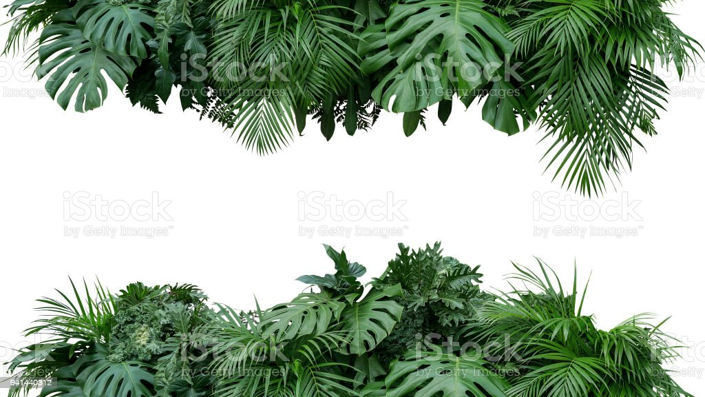 Tropical leaves foliage plant bush floral arrangement nature backdrop isolated on white background, clipping path included. stock photo