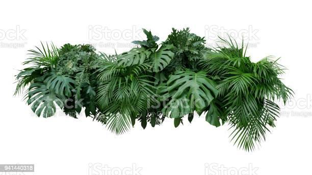 Tropical leaves foliage plant bush floral arrangement nature backdrop picture id941440318?b=1&k=6&m=941440318&s=612x612&h=ab3nye6inyncq9pk8axkc08k3m8flcy6o dfk5razdc=