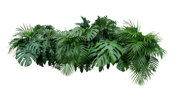 tropical leaves foliage plant bush floral arrangement nature backdrop isolated on white background, clipping path included. - lush foliage stock pictures, royalty-free photos & images
