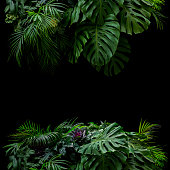 istock Tropical leaves foliage rainforest plants bush foral arrangement nature frame backdrop on black background. 1183608391