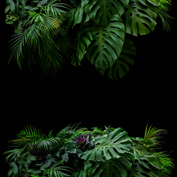 Tropical leaves foliage rainforest plants bush foral arrangement picture id1183608391?b=1&k=6&m=1183608391&s=612x612&w=0&h=lbfioo8kwazgxmdnwtuzlkttbmzhukbgpox0cg9ovi0=