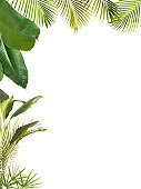 A selection of different tropical plants to form a frame with copy space on the white background.
