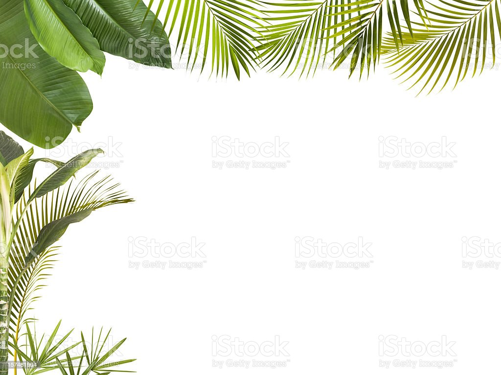 Tropical leaves frame isolated on white with copy space​​​ foto