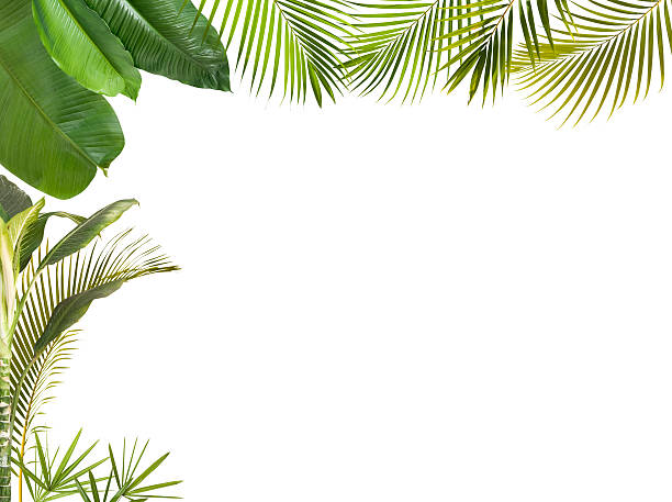 Tropical leaves frame isolated on white with copy space stock photo