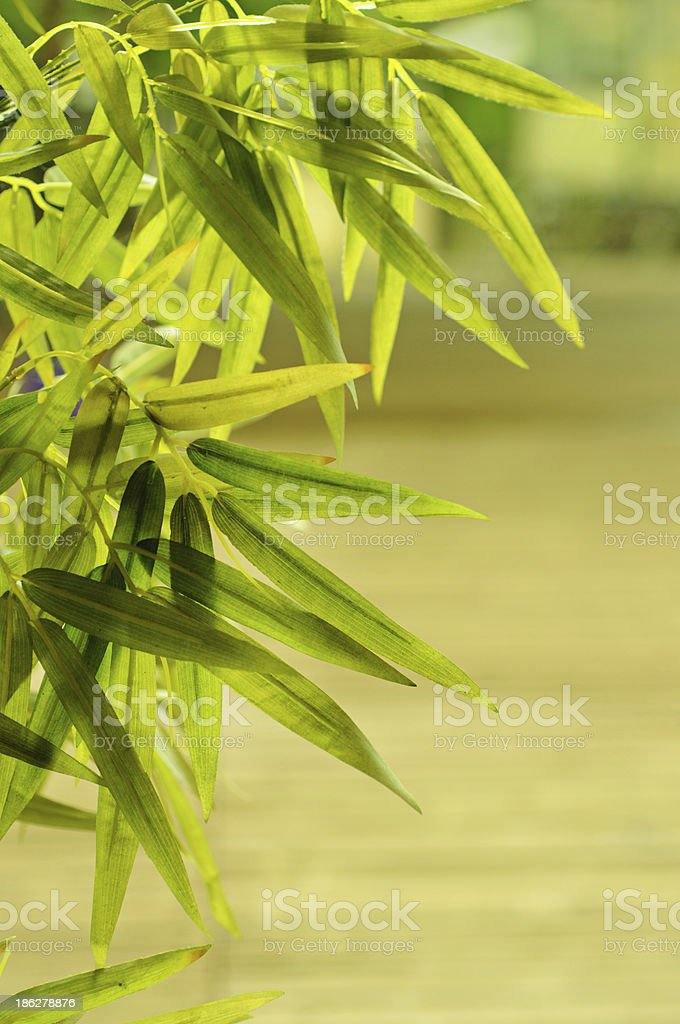 Tropical leaves frame royalty-free stock photo