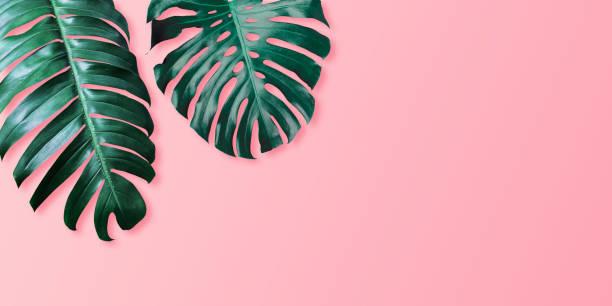 Tropical leaves monstera und philodendron auf rosa Farbe Hintergrund minimalen Sommer – Foto