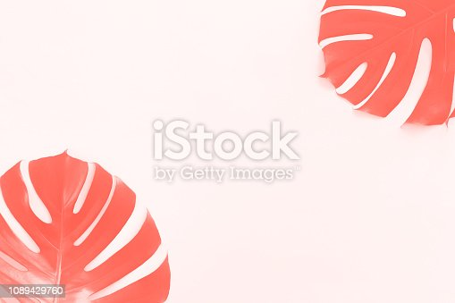 Tropical leaves Monstera in living coral tone on white background with copy space. Flat lay, top view