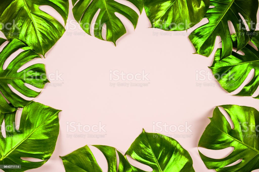 Tropical leaves Monstera on colorful background - Royalty-free Art Stock Photo