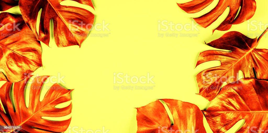 カラフルな背景に熱帯の葉のモンステラ - クリエイティブな職業のロイヤリティフリーストックフォト