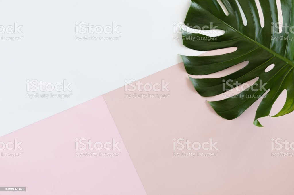 Tropical leaves Monstera on white and pink pastel background with copy space. Flat lay, top view royalty-free stock photo