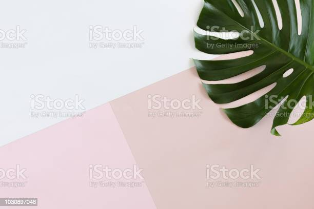 Photo of Tropical leaves Monstera on white and pink pastel background with copy space. Flat lay, top view