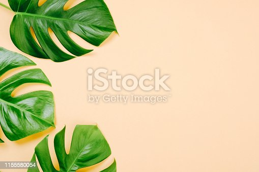 1153498948 istock photo Tropical leaves Monstera on yellow background with space for a text. Flat lay, top view, pastel colors, summer minimal concept 1155580054