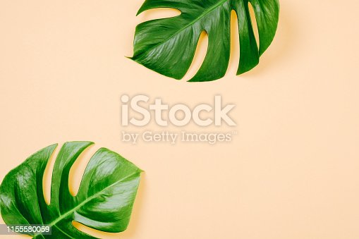1153498948 istock photo Tropical leaves Monstera on yellow background with space for a text. Flat lay, top view, pastel colors, summer minimal concept 1155580059