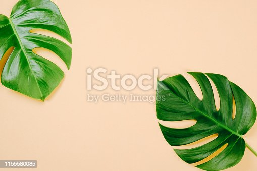 1153498948 istock photo Tropical leaves Monstera on yellow background with space for a text. Flat lay, top view, pastel colors, summer minimal concept 1155580085