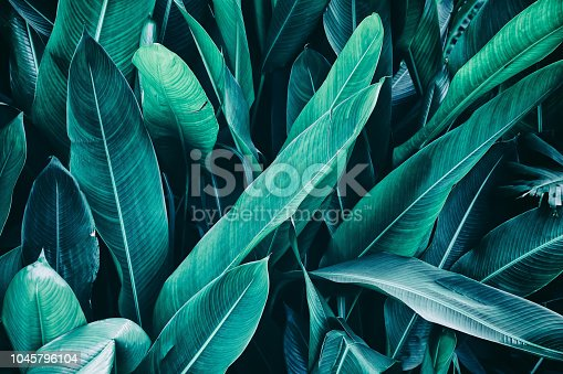 909846922 istock photo tropical leaves, nature background 1045796104