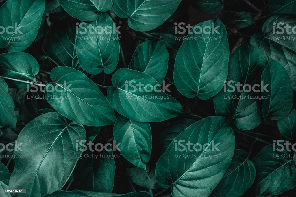 tropical leaves, nature background tropical leaves, abstract green leaves texture, nature background Abstract Stock Photo