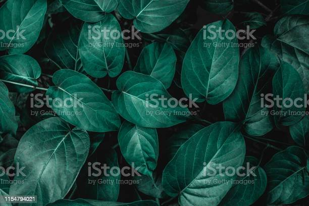 Tropical leaves nature background picture id1154794021?b=1&k=6&m=1154794021&s=612x612&h=mluimeb2nmfke220fqivcaesidcow944xpnj8 3bkrg=