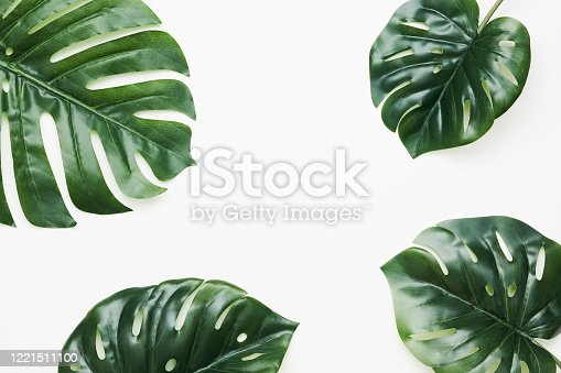 Tropical leaves nature frame layout of Monstera deliciosa, split-leaf philodendron, and pothos the exotic plants on white background