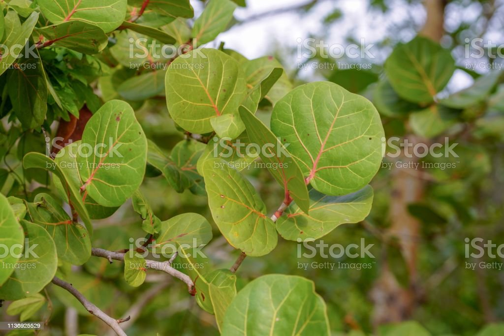 Tropical leaves of Florida stock photo