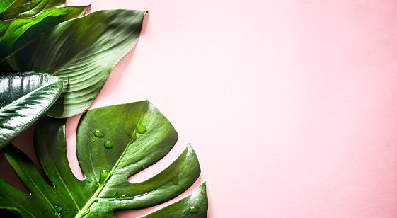 istock tropical leaves on a colored background 1011505500