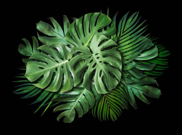 Tropische Blätter auf schwarzem Hintergrund mit Kopierraum Sommer-Banner-Design – Foto