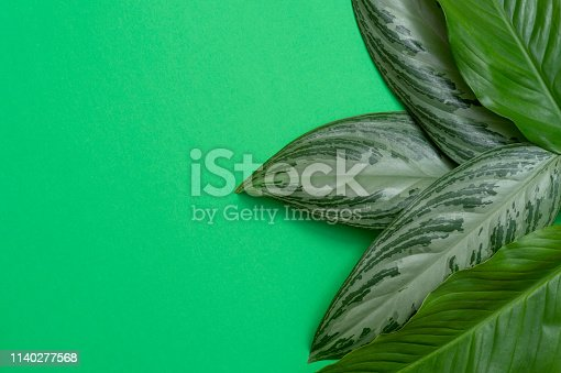 666980960 istock photo Tropical leaves on green background a space for text. Top view, flat lay 1140277568