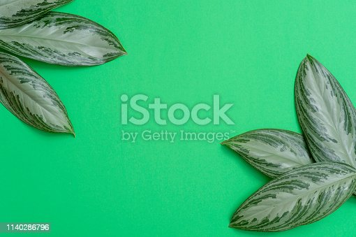 666980960 istock photo Tropical leaves on green background a space for text. Top view, flat lay 1140286796