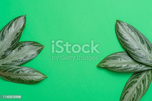 666980960 istock photo Tropical leaves on green background a space for text. Top view, flat lay 1140525358