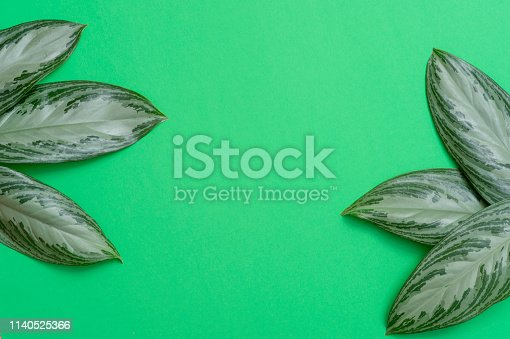 666980960 istock photo Tropical leaves on green background a space for text. Top view, flat lay 1140525366
