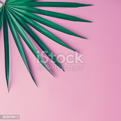 istock Tropical leaves on pastel pink background. minimal concept. Flat lay. 653329512