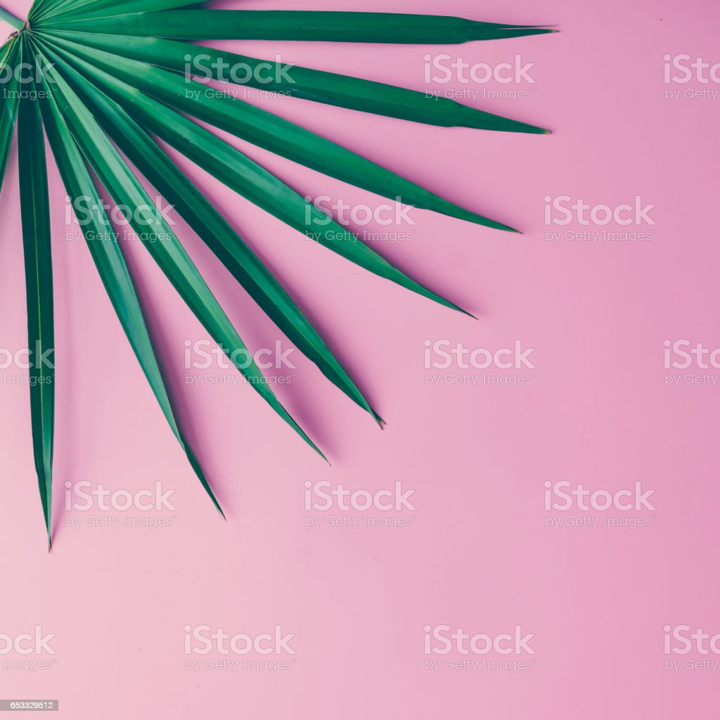Tropical leaves on pastel pink background. minimal concept. Flat lay. - foto stock