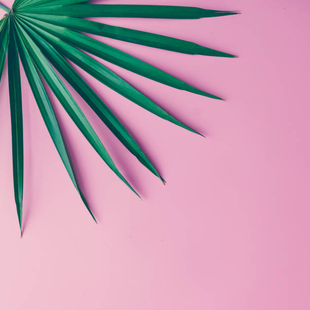 Tropical leaves on pastel pink background. minimal concept. Flat lay. stock photo