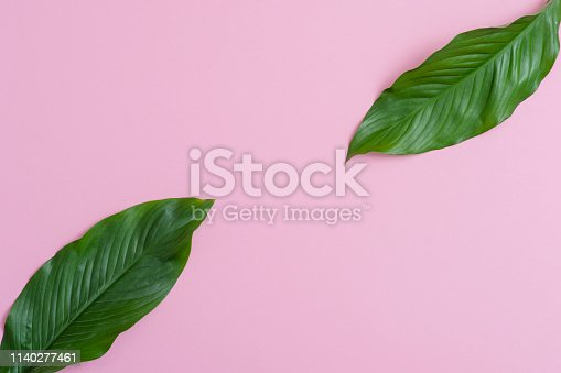 666980960 istock photo Tropical leaves on pink background a space for text. Top view, flat lay 1140277461