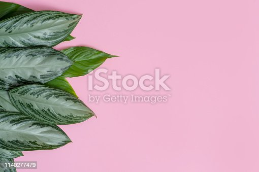 666980960 istock photo Tropical leaves on pink background a space for text. Top view, flat lay 1140277479