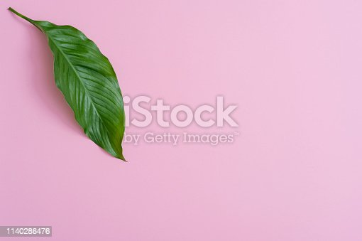666980960 istock photo Tropical leaves on pink background a space for text. Top view, flat lay 1140286476